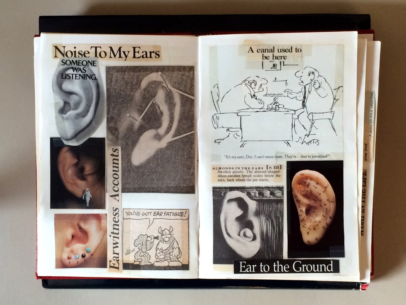 Flickr cc-by- Bill Smith – Ears